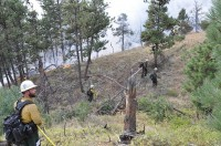 Colorado Independent   Human-caused Wildfires Further Fan Flames of Beetle-kill Debate