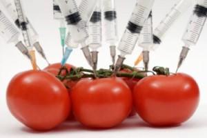 EatLocalGuide.com | The Great GMO Debate
