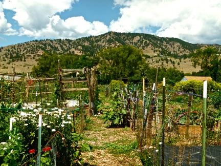 Volunteering at Growing Gardens   The Blue Line