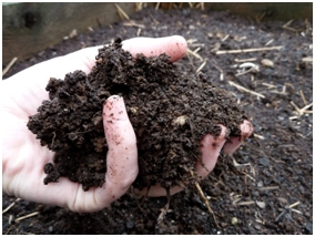 Hope for our Changing Climate: Soil Sequestration of Carbon