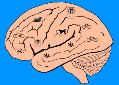 brainsm