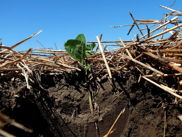 Soil Health: Soybeans Planted into Winter Wheat Stubble, Natural Resource Conservation Center, https://flic.kr/p/dgETYd