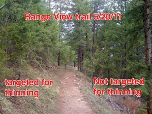 Boulder Reporter   Flagstaff tree thinning: threat level still high
