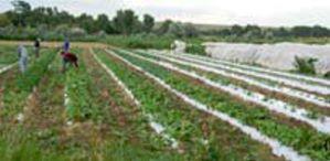 Listen:  KGNU on GMOs (Updated)
