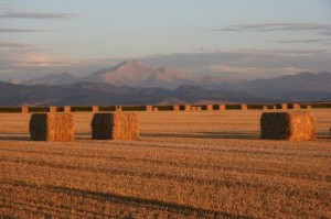 Can Cropland Policy Help Boulder County Farmers?