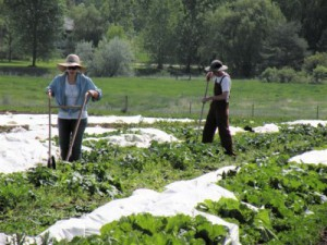 The Citizens' Cropland Policy