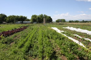 How Do We Grow Organic Farming in Boulder County?