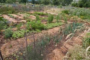No Agricultural Easements Inside Boulder