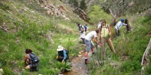 Restoring Wildlands