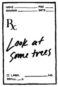 The Atlantic | The Health Benefits of Trees