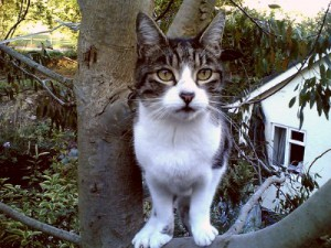 Boulder Cat Shows Poor Judgment